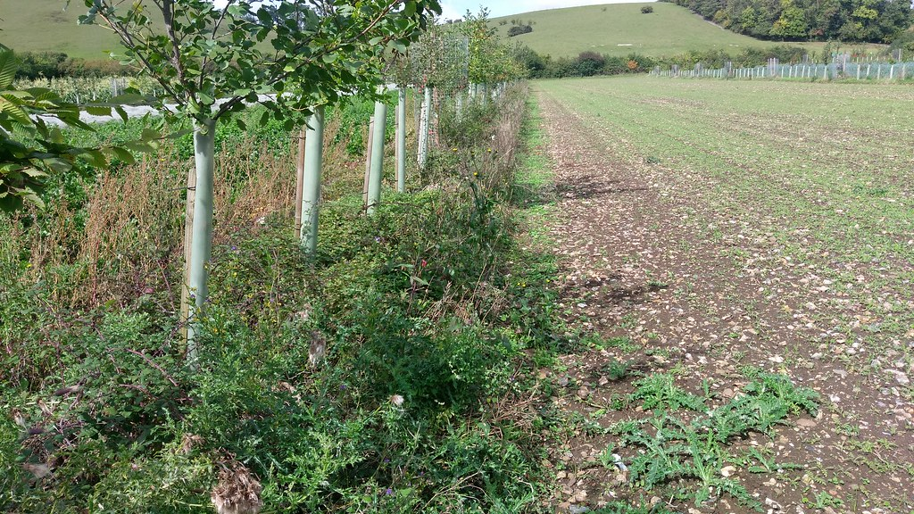19 September 2017 - Agroforestry for Growers