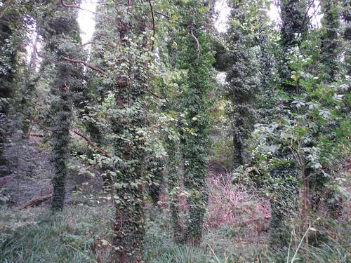 Wood near Coombe Farm