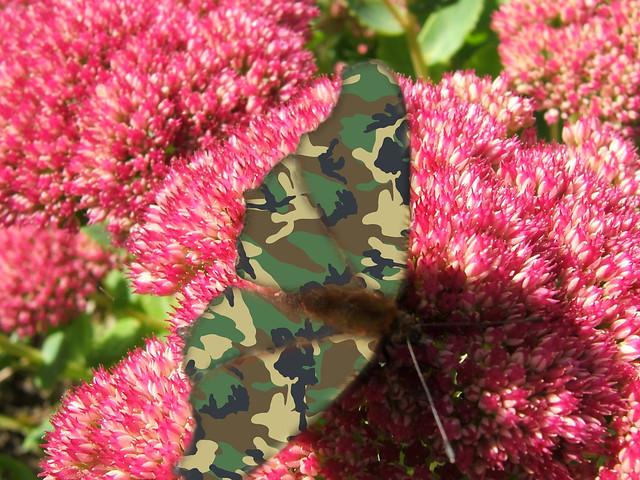 camouflage Butterfly, Fujifilm FinePix E550