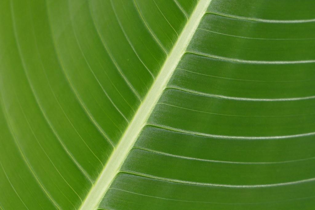 Green Leaf, Ecuador