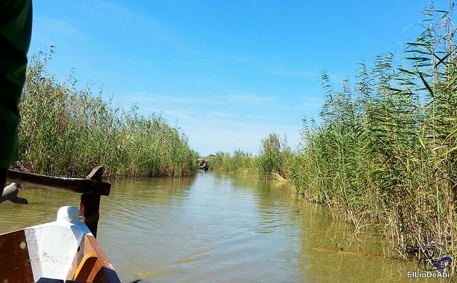 Paseo en barca por la Albufera de Valencia (11)