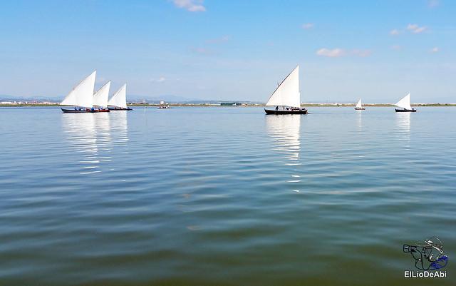 Paseo en barca por la Albufera de Valencia (8)