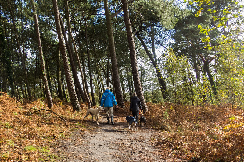 Walking with friends on Upton Heath