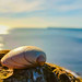 Seashell on the seashore
