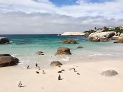 Simon's Town, Pinguine gucken