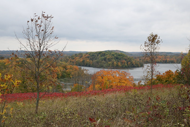two leafless trees in the foreground overlooking a line of sumacs at the edge of the hill, with a lake and island in the background