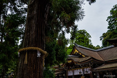 Photo:The worship and a spiritual tree By snakecats