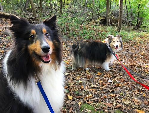 Out on a walk during National Dog Week 2017