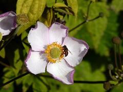 Flower in Bury 3