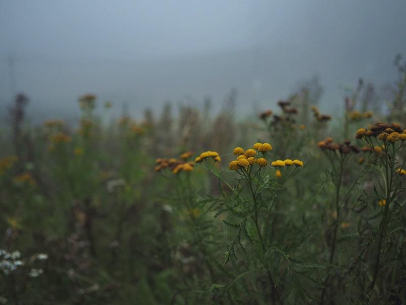 fog-sumu-kuopio-antikkala