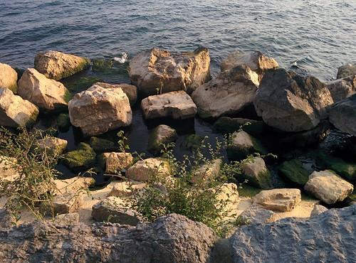 Shore #toronto #ontarioplace #rock #beach #latergram