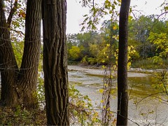 Chagrin River through the trees
