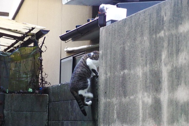 Today's Cat@2017-10-24