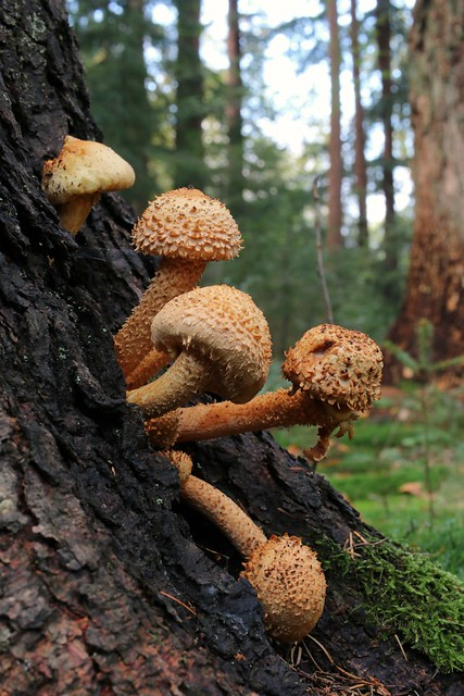 Curious mushrooms wondering about the big outdoors