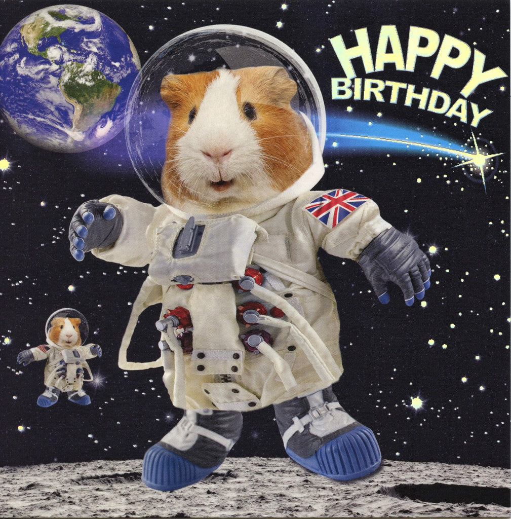 PACK OF 5 SPACE WALKING GUINEA PIG HAPPY BIRTHDAY CARDS 1STP/&P