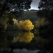 Small photo of Tree in a lake