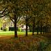Cambridge Autumn