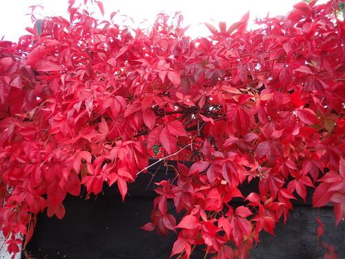 Autumnal Colours, Brents