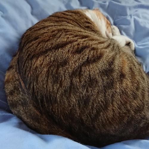布団乾燥機を使っている上から平気で寝る by Chinobu