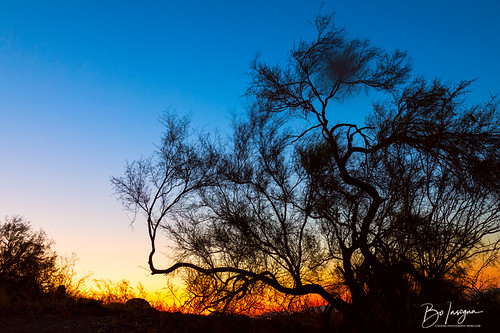 paloverde tree silhouette southwest sky sunrise sunsets nature landscapes arizona jamesinsogna morning colorful blue yellow desert phoenix unitedstates