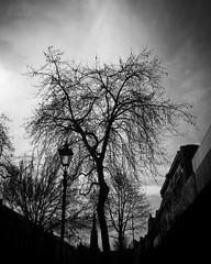 Dunedin Winter Street Scene Along George Street on a sunny Winter's day. #dunedin #newzealand #travel #outdoors #nature #winter #tree #silhouette #blackandwhite #blackandwhitephotography #bnw_drama #bnw_legit #bnw_captures #gf_bnw #bnwmaster