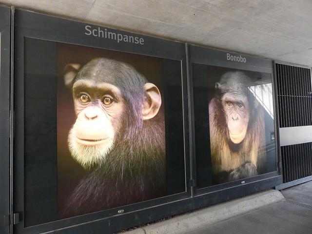 Tunnel zur Orang-Anlage, Wien