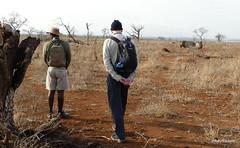 Walking with White Rhino, Mkhaya (6)