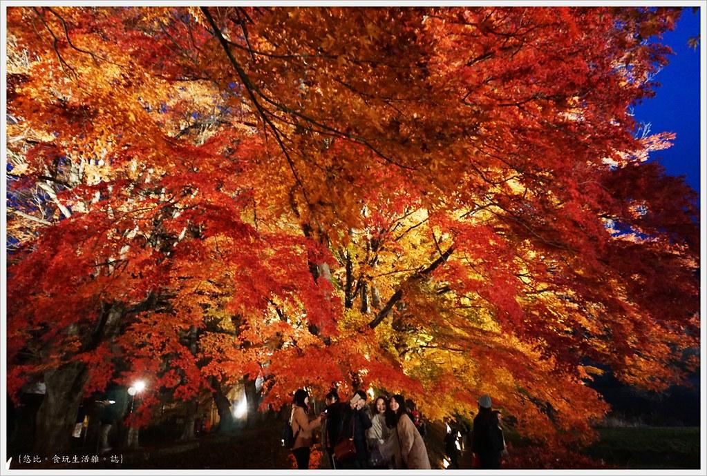 紅葉迴廊-紅葉祭-夜楓-9