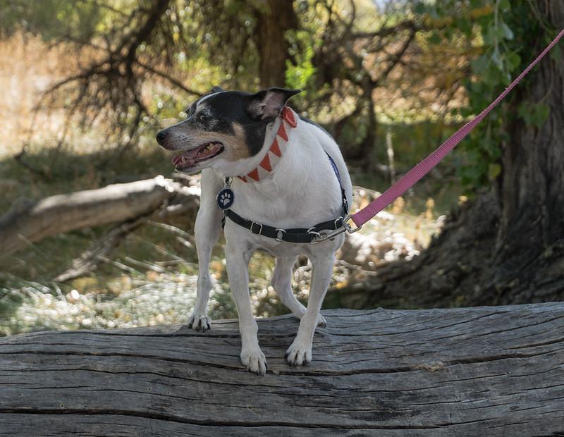 Anya on Cottonwood Log
