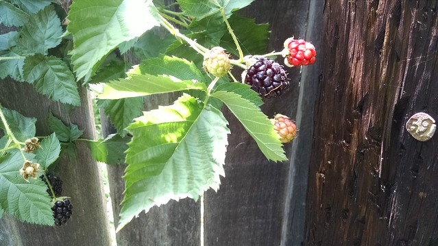 IMG_20160508_145029989 backberry goleta