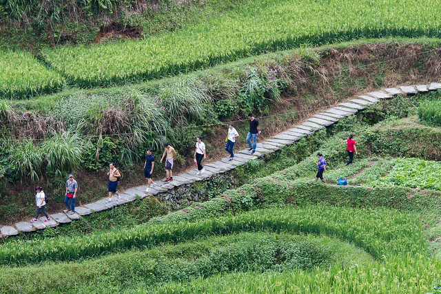 rice terrace - 2
