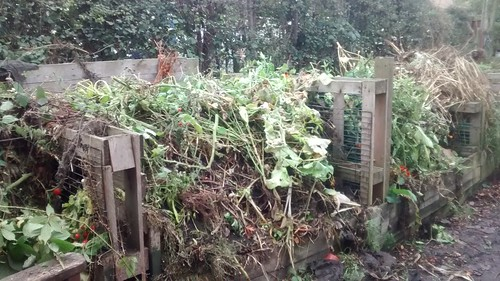 compost bin Oct 17