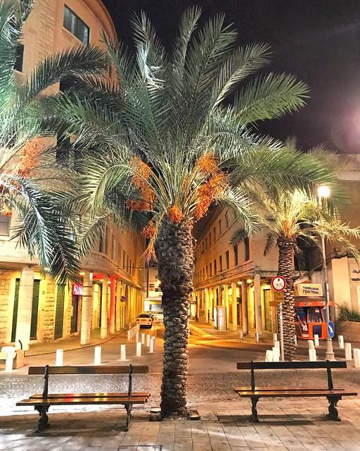 Haifa Palm Trees