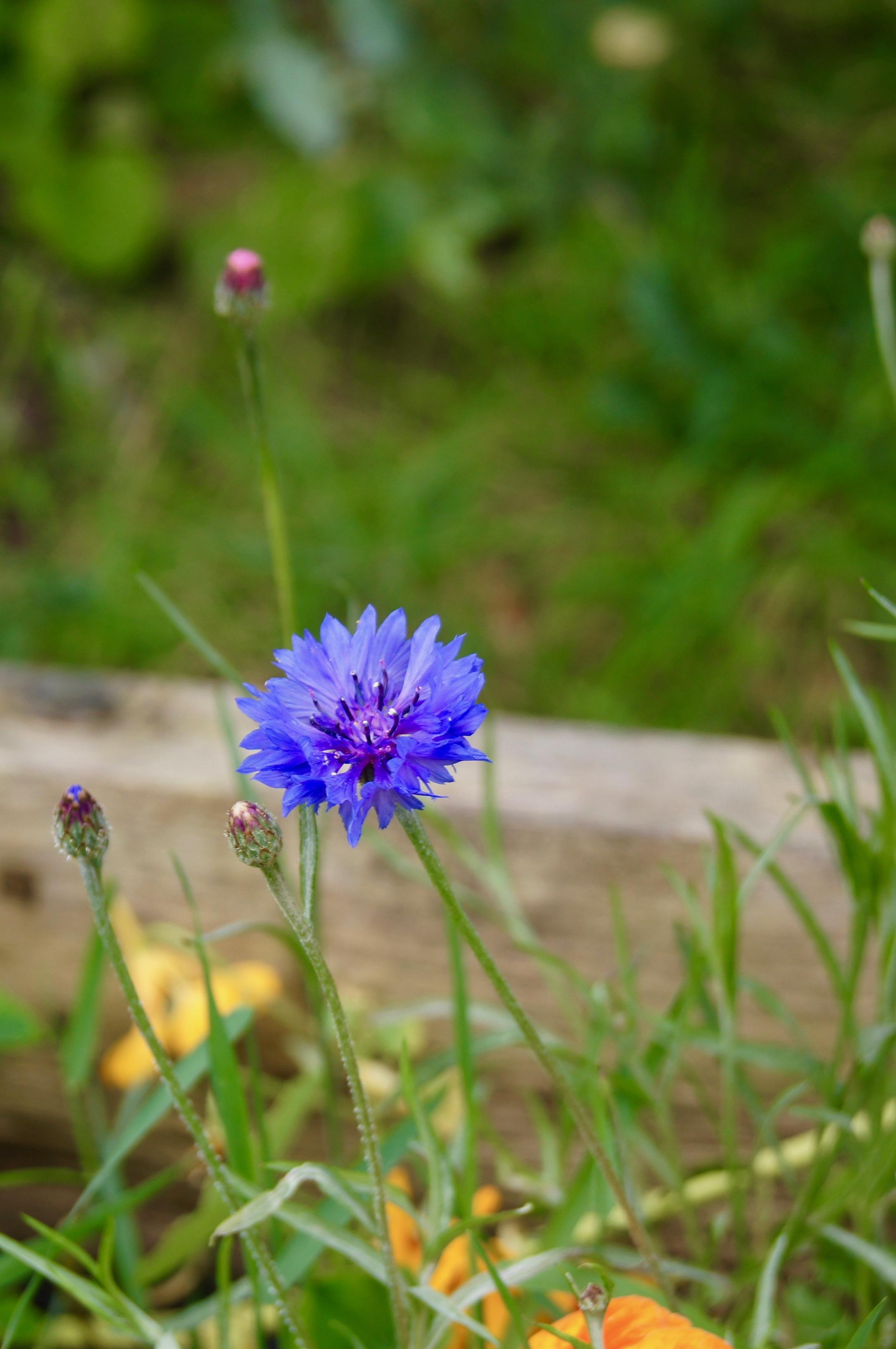 Colour Walk Manchester - flower