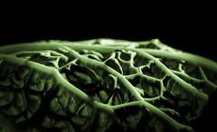 Cabbage Leaf-1