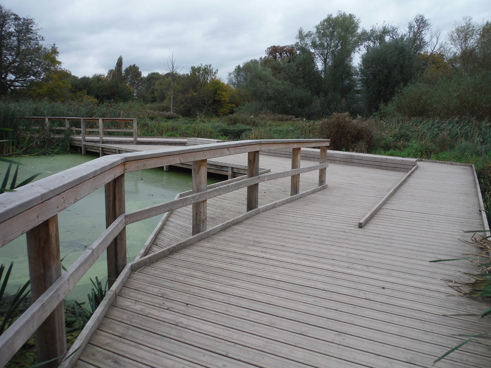 Boardwalk through Wetlands, Morden Hall Park SWC Walk Short 13 - Morden Hall Park and Merton Abbey Mills