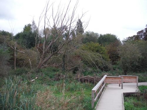 Boardwalk through Wetlands, Morden Hall Park