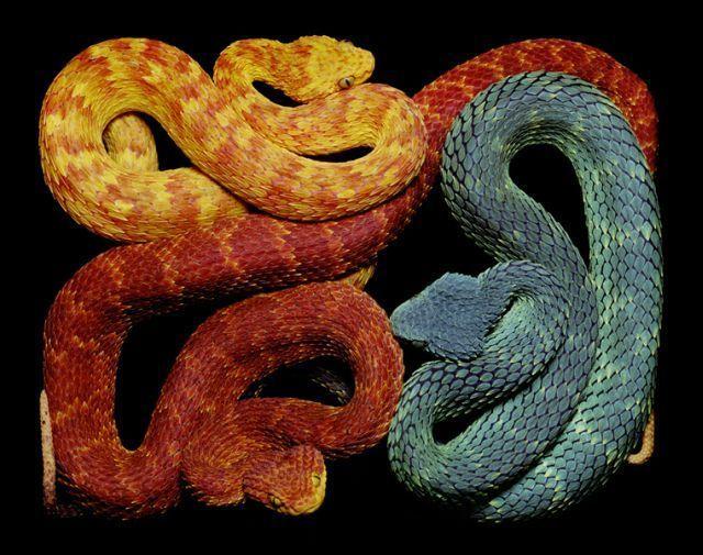 snake_art_23