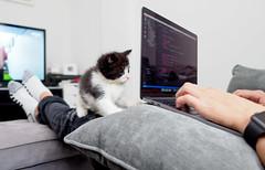Code and kitten