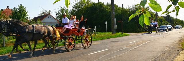 Kossuth u. Korossegapati Hungary....They Make Their Way To Wedding