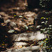 angeles national forest scene
