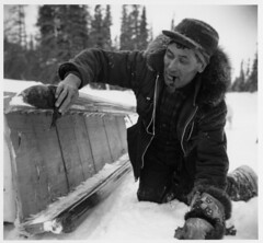 Moses Koostachin of Weenusk icing mud-surfaced runners of sled with remains of noon tea in muskeg between Weenusk and Hawley Lake
