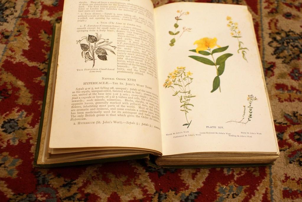 Ouvrage de botanique dans l'une des nombreuses librairies du Vieux Edimbourg.