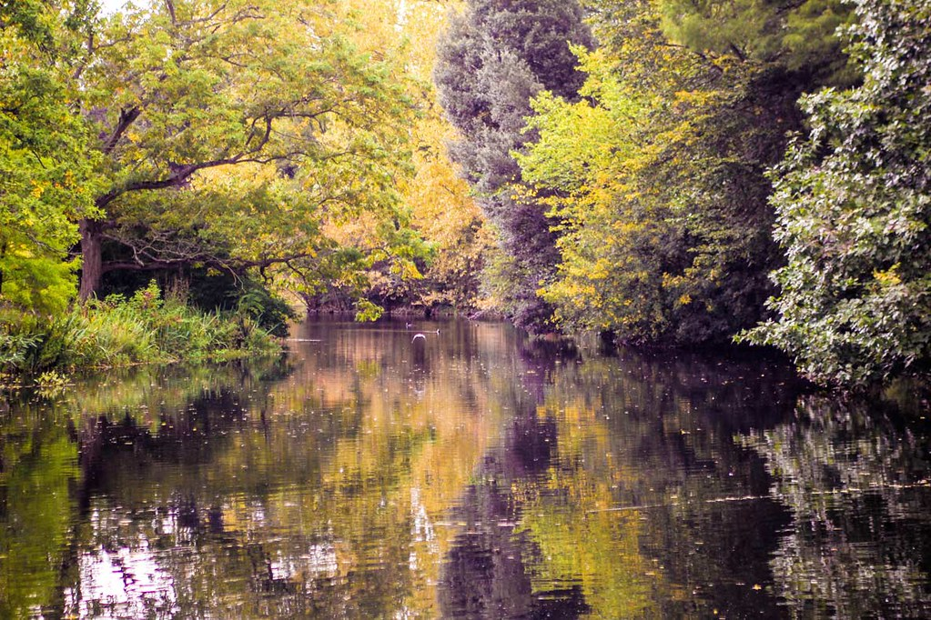 One of the lakes at Kew Gardens, London, surrounded by colorful autumn leafs on tall trees.