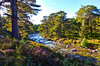 Mar Lodge Estate 19 September 2017 163.jpg