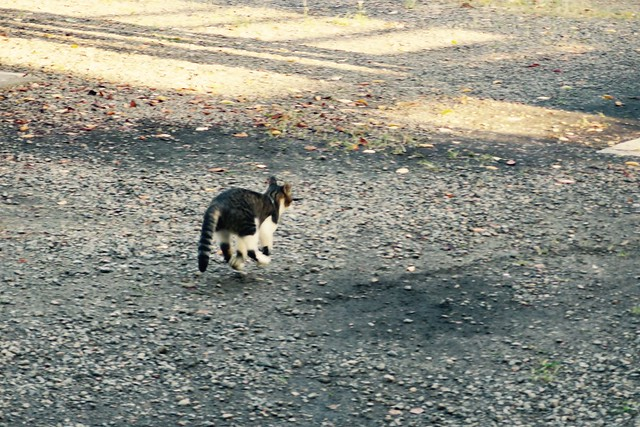 Today's Cat@2017-09-29