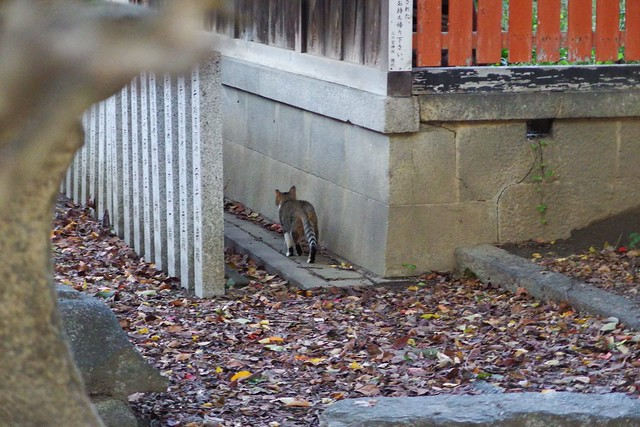 Today's Cat@2017-11-01