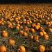 Pumpkins to Infinity