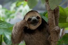 Sloths-image-sloths-36191149-1536-1024