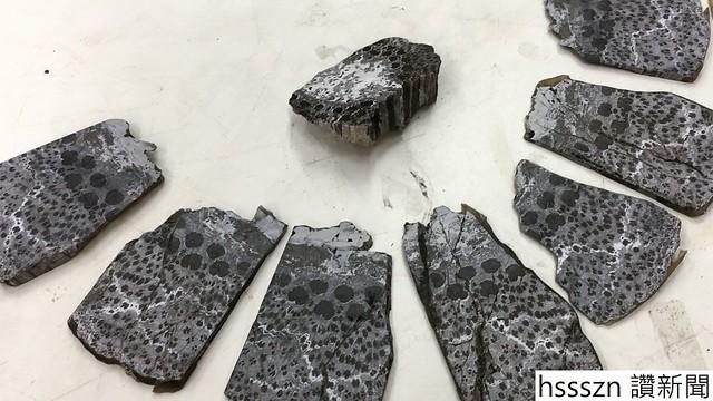 cc_fossil-tree2_16x9_1280_720